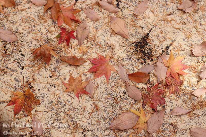 落葉の画像