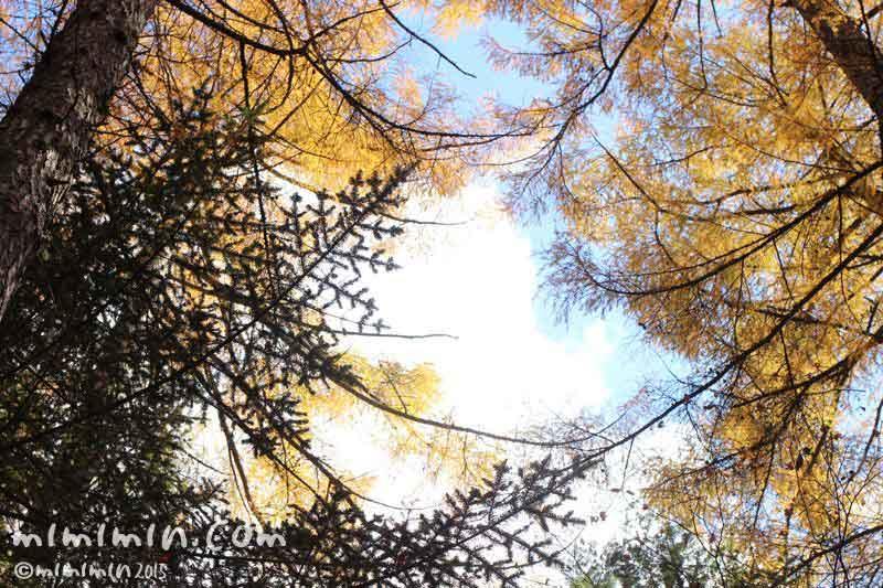 秋晴れの空の画像