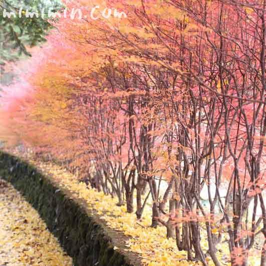秋の軽井沢の写真