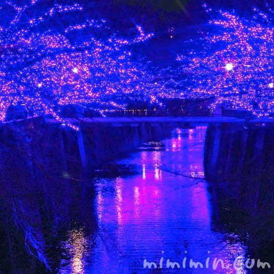 中目黒のイルミネーション「青の洞窟」2014の写真