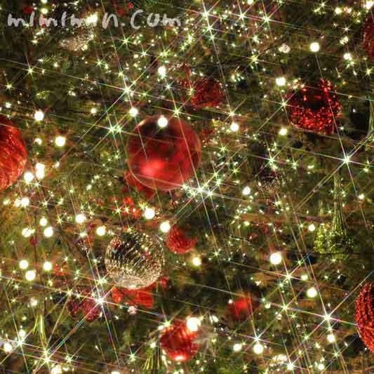 恵比寿ガーデンプレイスのクリスマスツリークリスマスツリーの写真