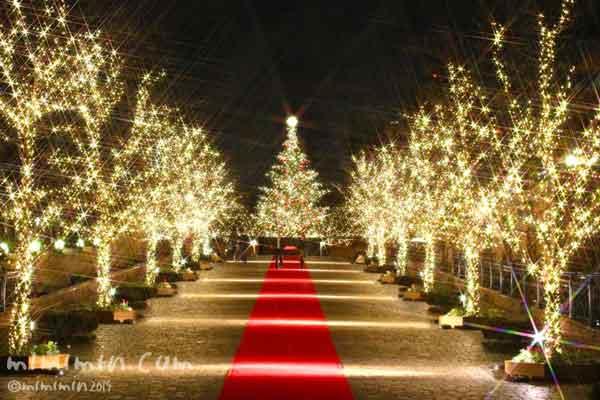 恵比寿ガーデンプレイスのイルミネーションの写真