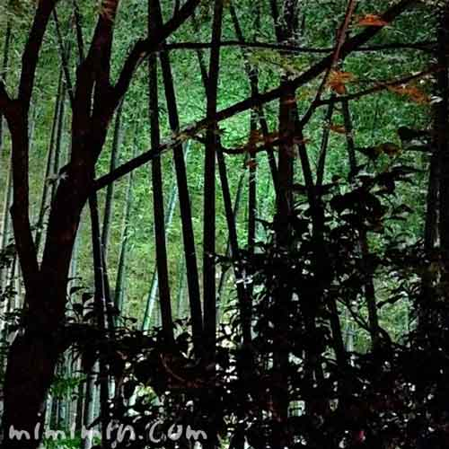 高台寺の竹の写真