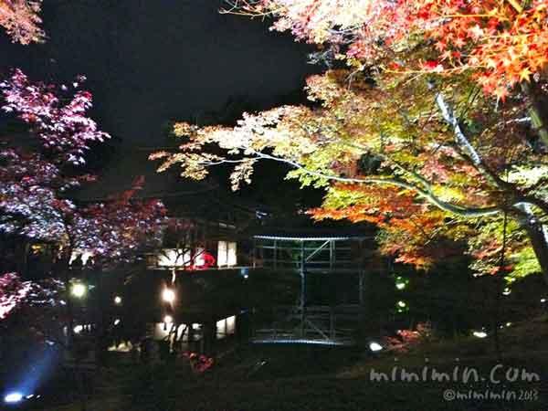 京都高台寺の臥龍池の水鏡の写真