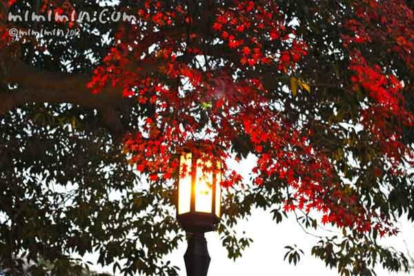 モミジと灯籠の写真