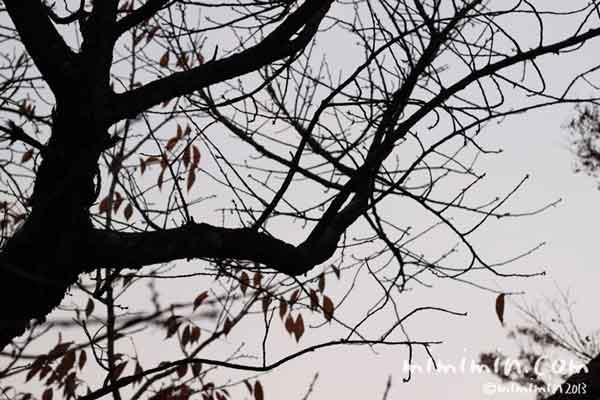 枯れ葉の木の画像