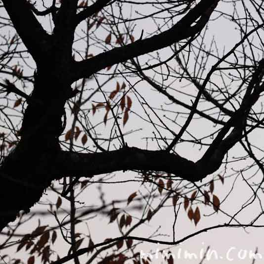 枯れ葉の写真