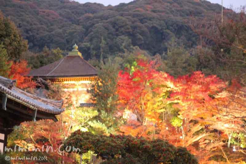 高台寺(京都)の紅葉の画像