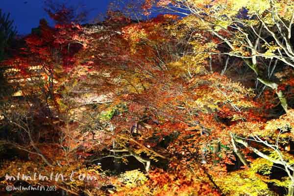 高台寺(京都)の紅葉のライトアップの画像