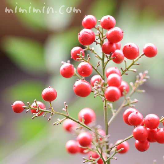 南天(ナンテン)の赤い実