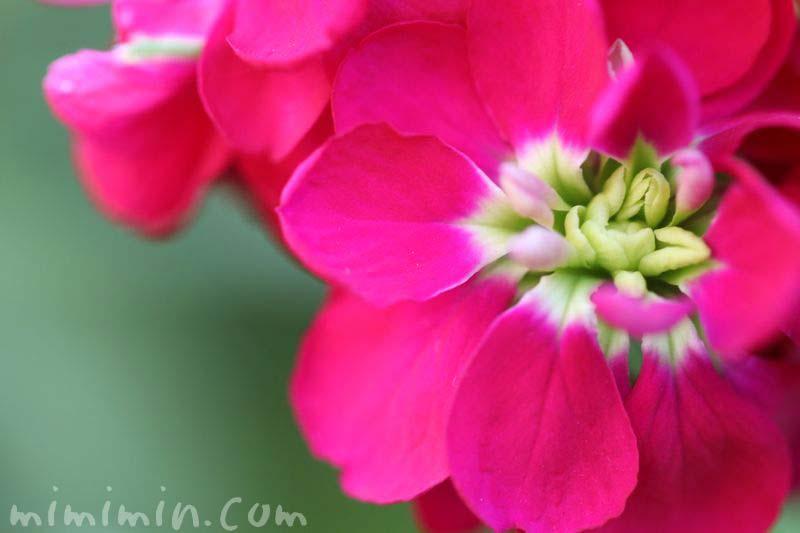 ストック・濃いピンク色の画像