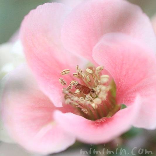ボケの写真&花言葉の画像