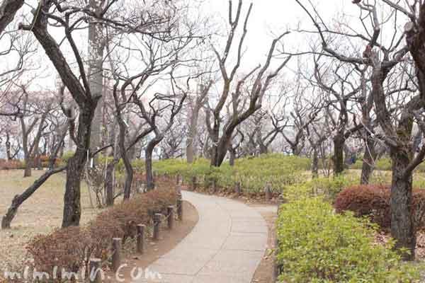 羽根木公園(梅ヶ丘)の写真