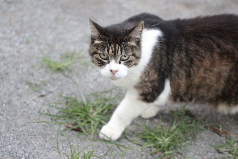 警戒するネコの画像