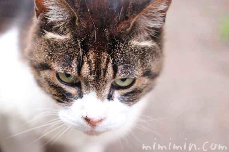 不機嫌なネコの写真