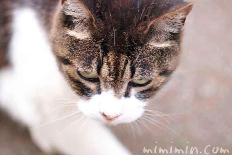 目つきの悪い猫の写真