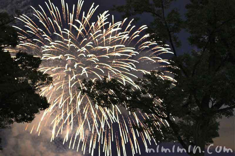 横浜ポートサイド公園から見た神奈川新聞花火大会の花火の画像
