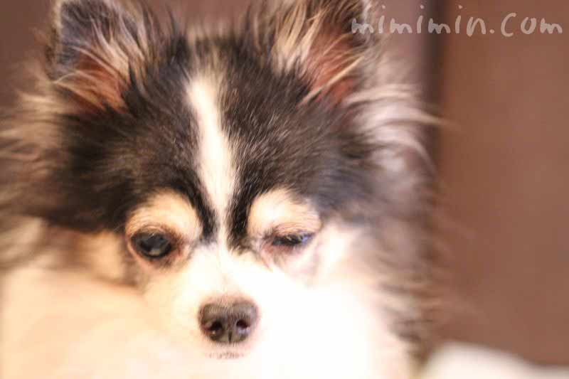犬が片目を閉じたままの写真