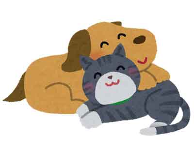 ペット保険の犬猫のイメージ画像