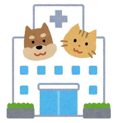 ペット保険のイメージ画像