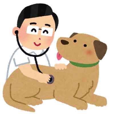 ペット保険 動物病院のイメージ画像