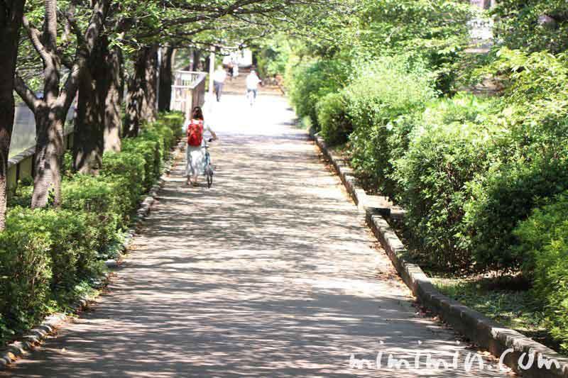 犬の散歩 目黒川の画像