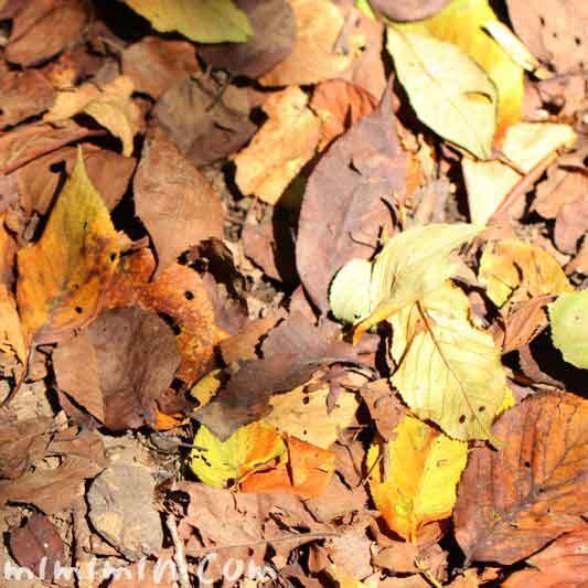 落葉 目黒川の散歩