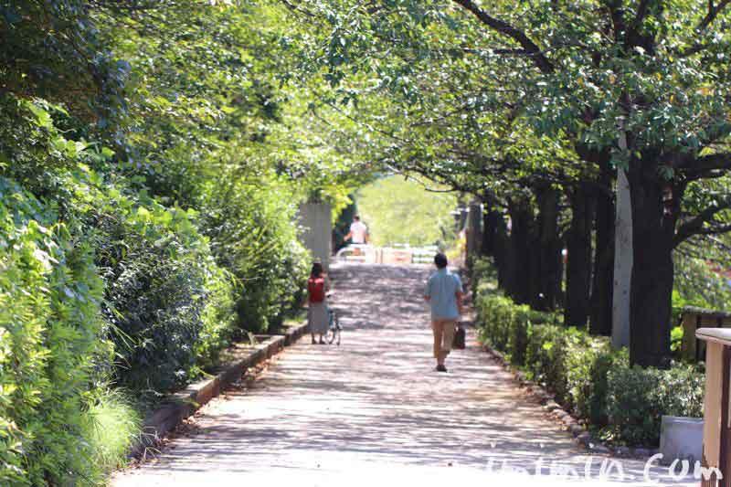 目黒川 犬の散歩の写真