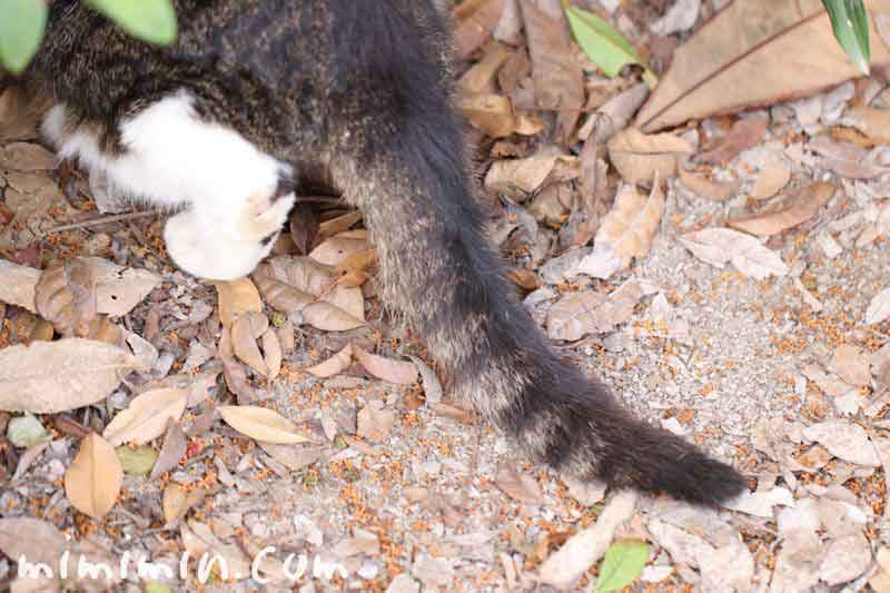 虎猫のしっぽの写真