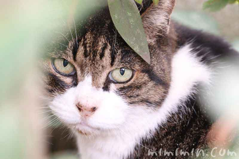 野良ネコの画像