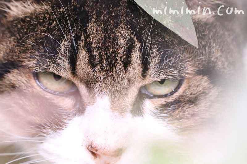 目つきの悪い野良猫の画像