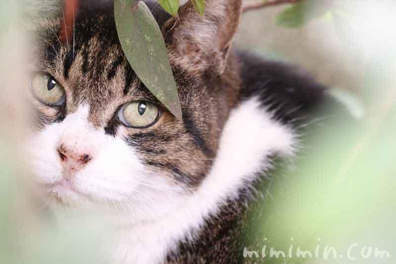 catの写真