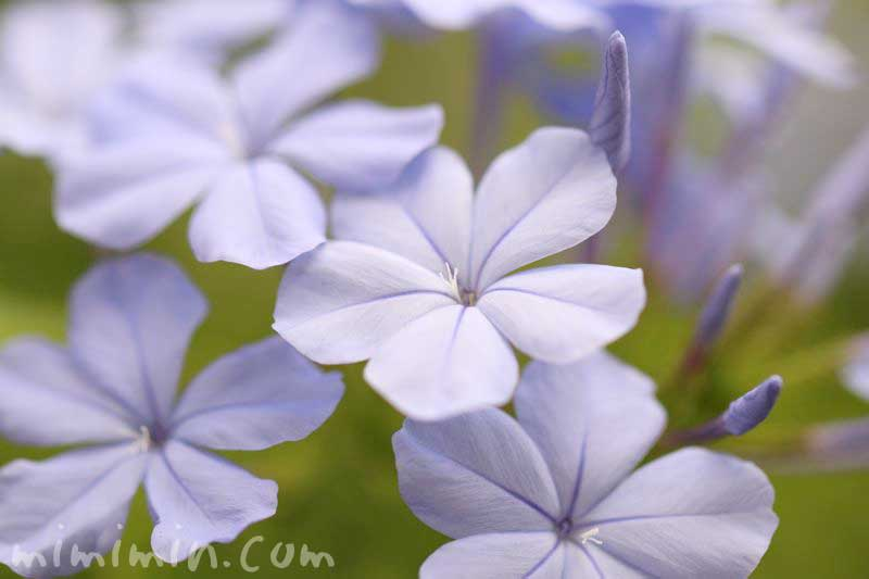 食虫植物の画像