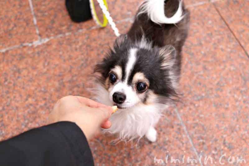 ジョエルロブションのサンドイッチと犬の画像