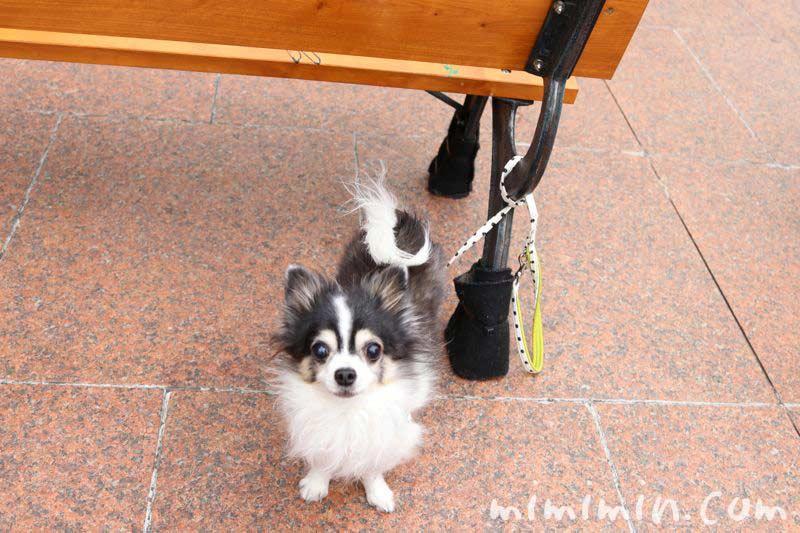 恵比寿ガーデンプレイスの犬の写真