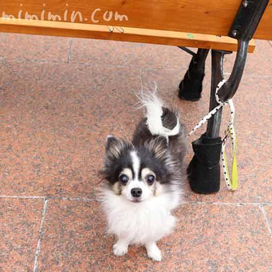 犬と恵比寿ガーデンプレイスの画像