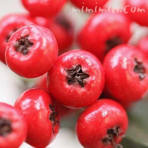 ピラカンサの赤い実の画像