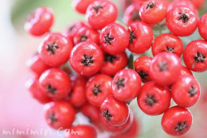 常磐山査子の赤い実