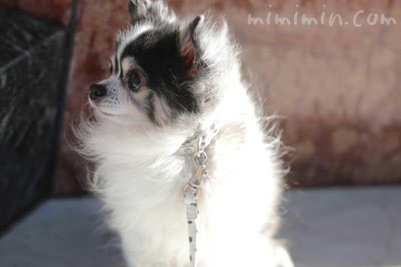 犬の散歩・恵比寿の画像