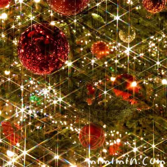 クリスマスツリー(クリスマスの写真)