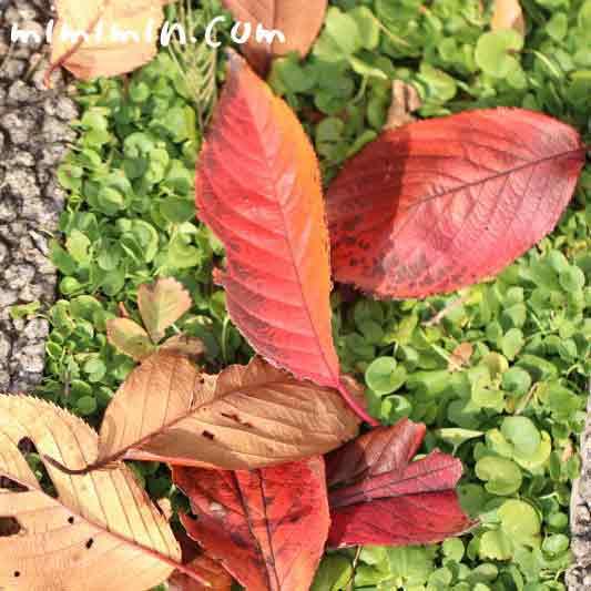 落葉お画像