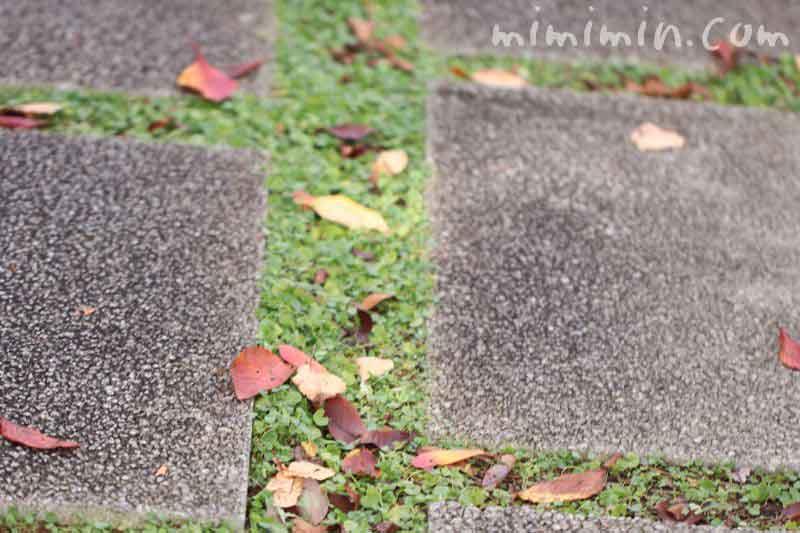 恵比寿ガーデンプレイス・落ち葉の道の画像