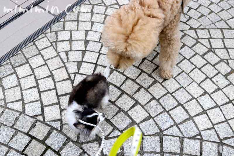 ガーデンプレイス・犬の写真
