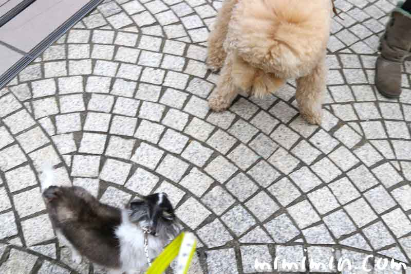 恵比寿ガーデンプレイス・犬の画像