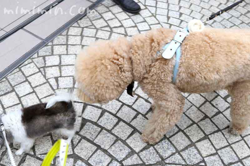 恵比寿マルシェ・犬の写真