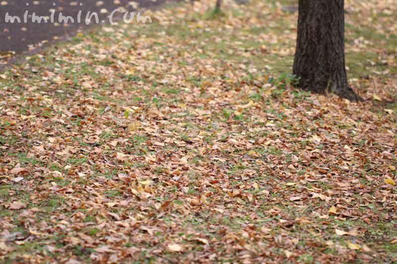 落葉・枯れ葉の画像