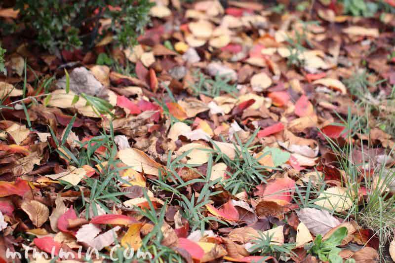 落ち葉の道の画像