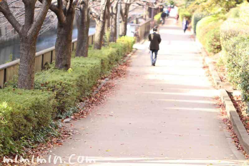 目黒川遊歩道・冬の画像