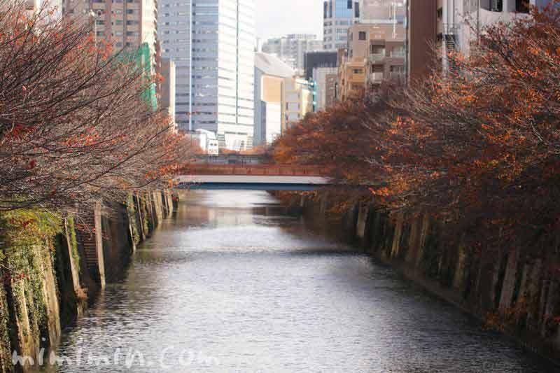 目黒川・冬の写真