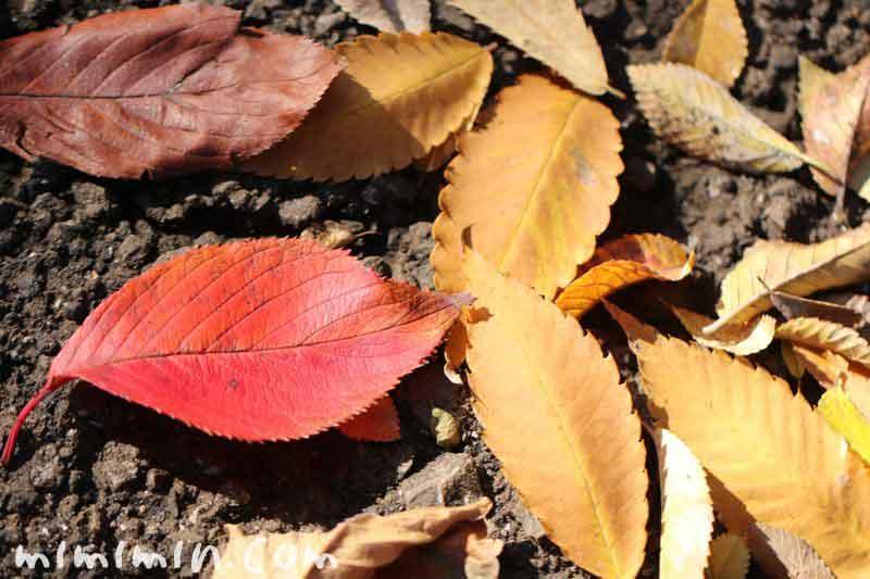 赤と黄色の落葉の写真
